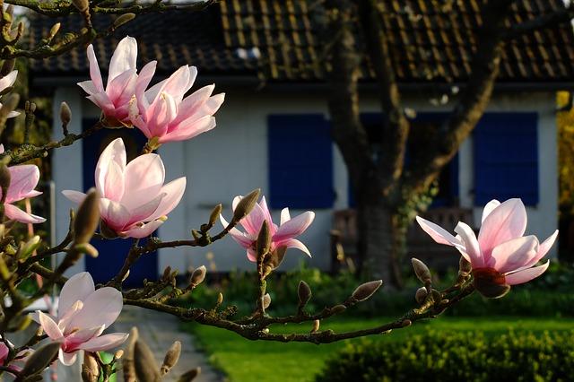 magnolia 193604 640 - 社会福祉士の仕事をやめたいと思っている人向け。対処法を紹介します。
